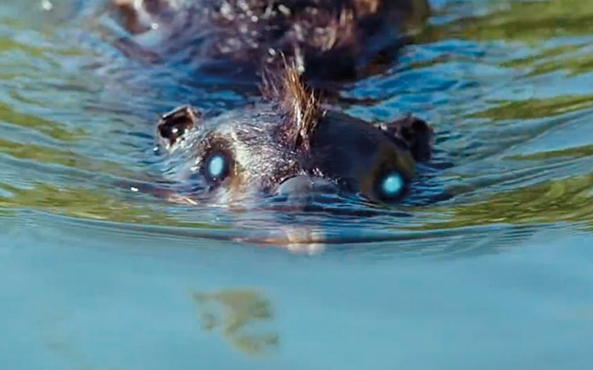zombeavers-featured-1900x560-1413465913
